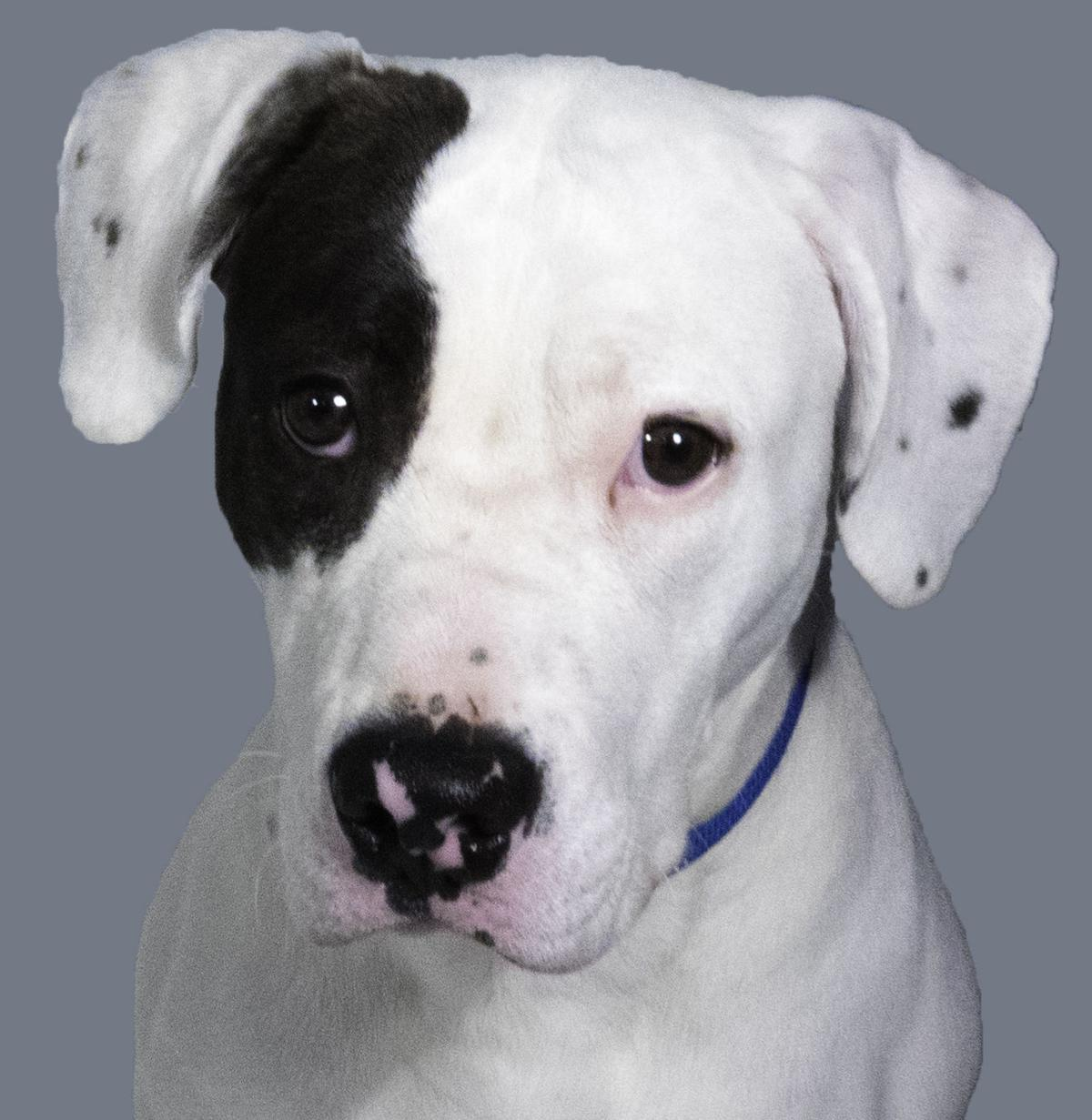 SMAC Pet of the Week -- Cheese Cake