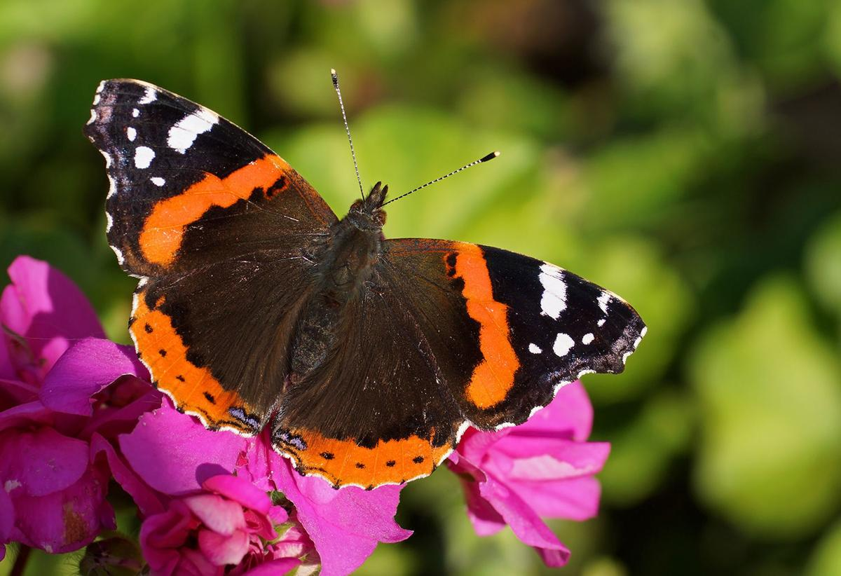 South On 101 Butterflies Lemon Festival And New York Jazz Tiket Butterfly Park Insect Kingdom Alive