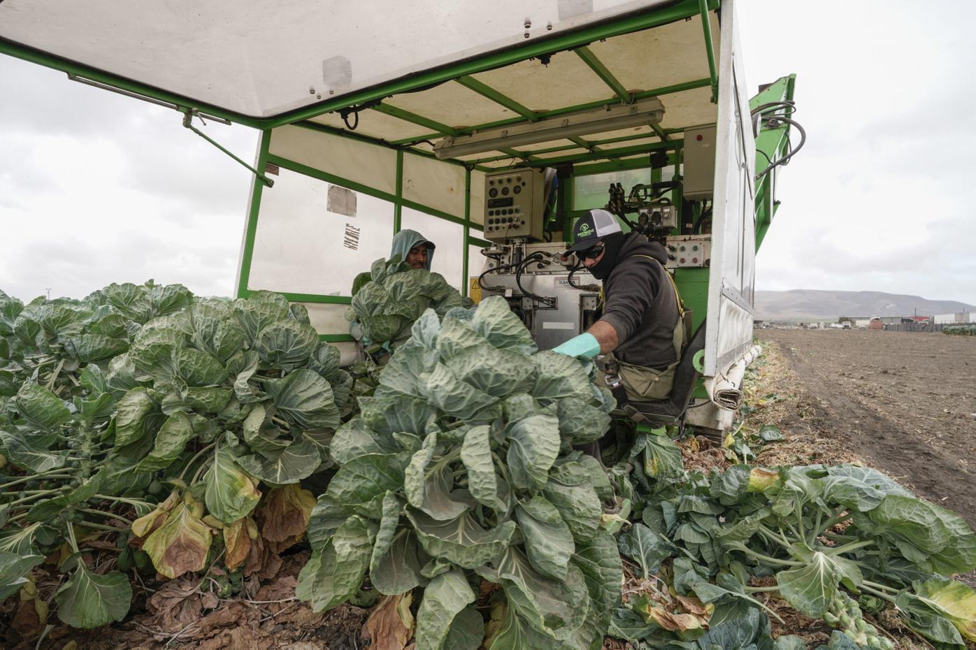 092819 Farm Day 10.jpg