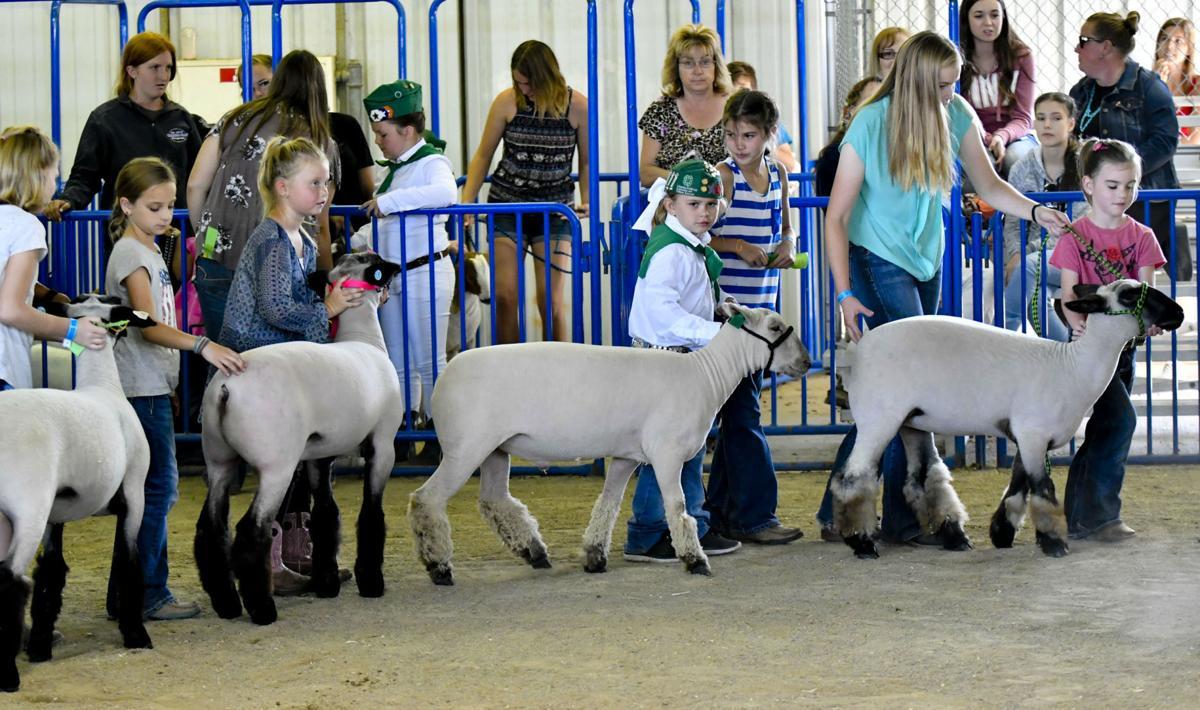 071118 County Fair Pee Wee 02.jpg