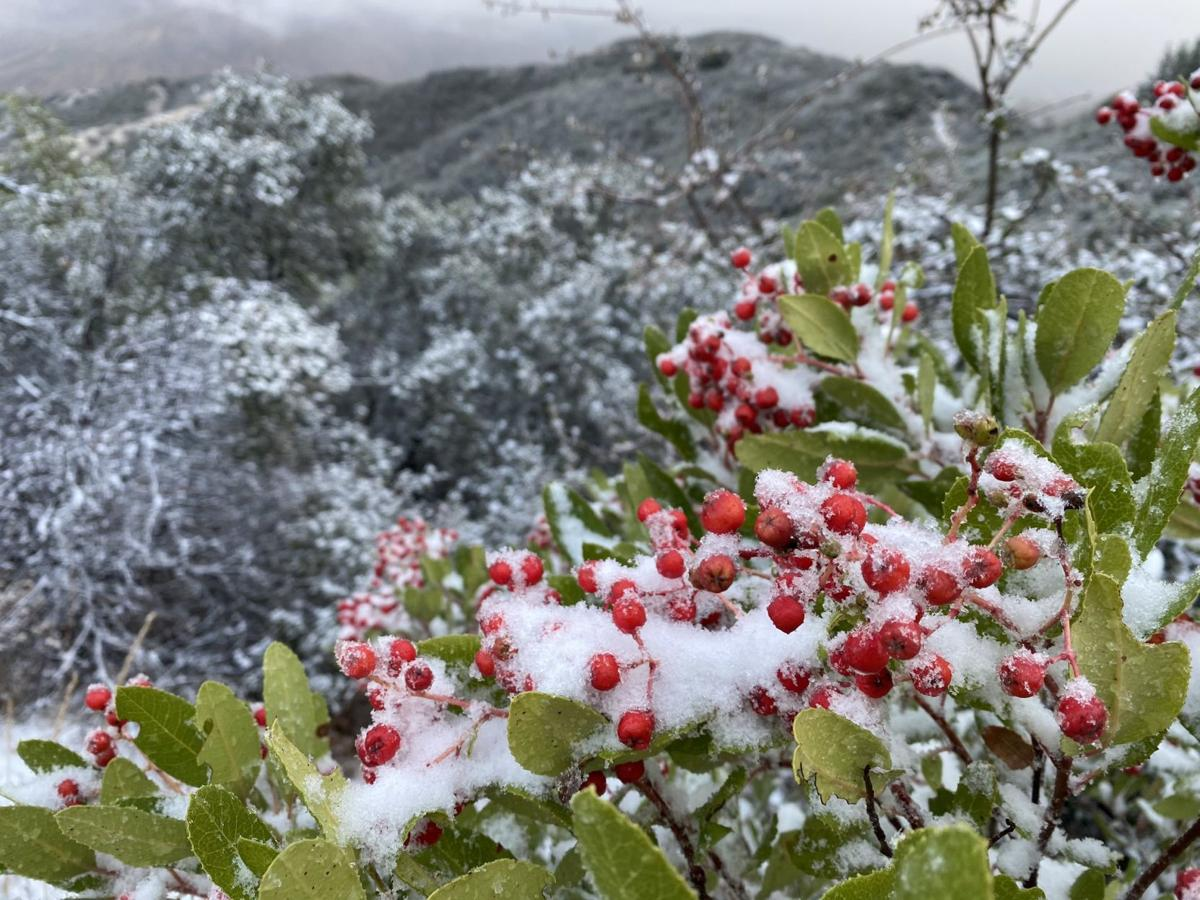 Cave Fire Snow Berries