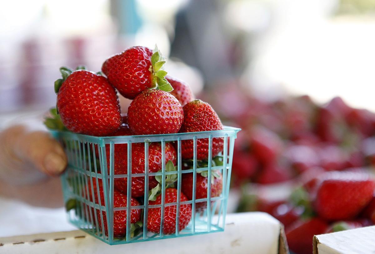 050416 SLO County strawberries
