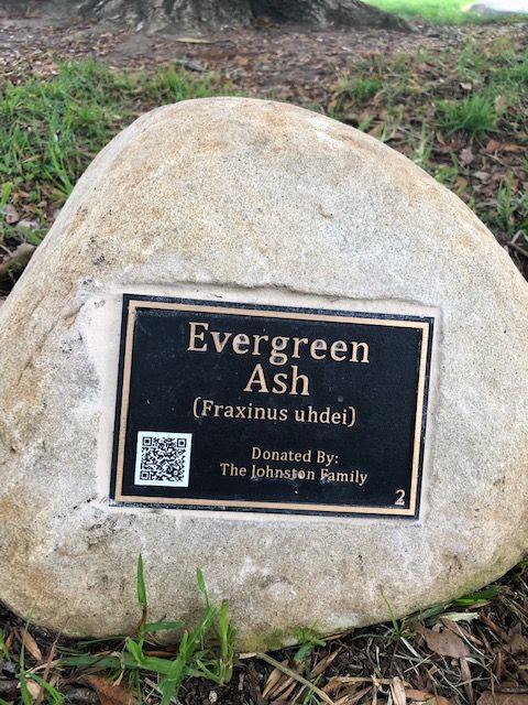 101218 Arboretum 1.jpg