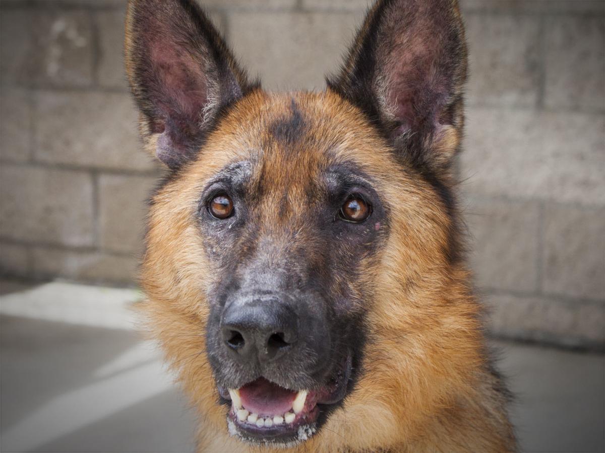 051920 CAPA Pet of the Week