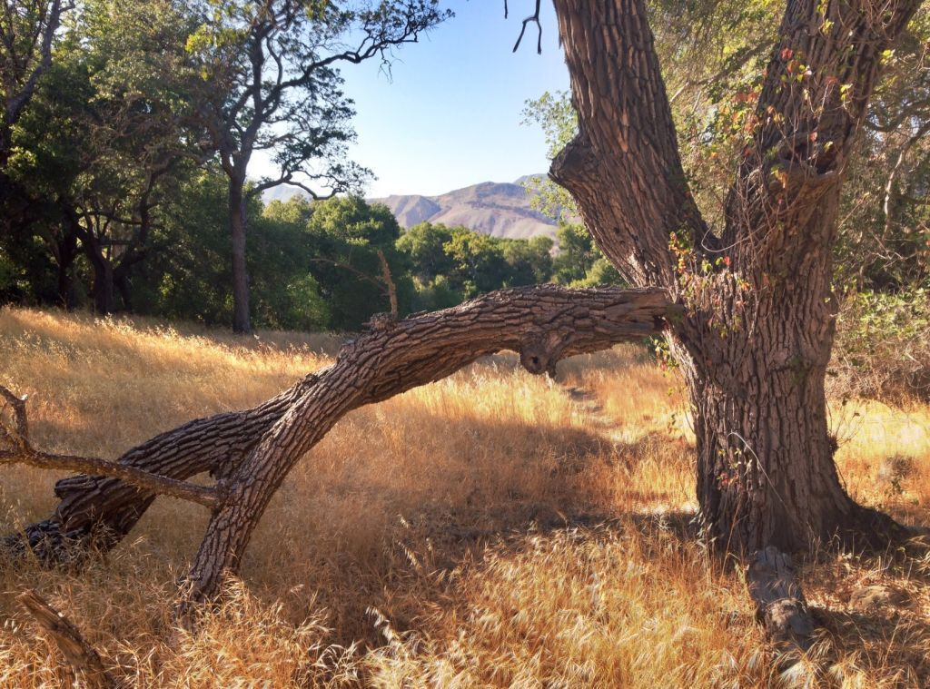 Judith Dale: Los Padres National Forest in your backyard