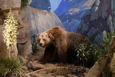 100820 SB Natural History reopens