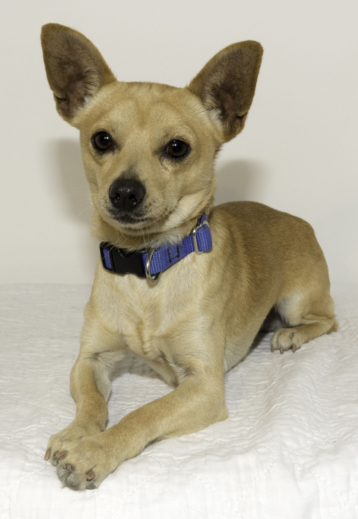 SMAC Pet of the Week -- Jed