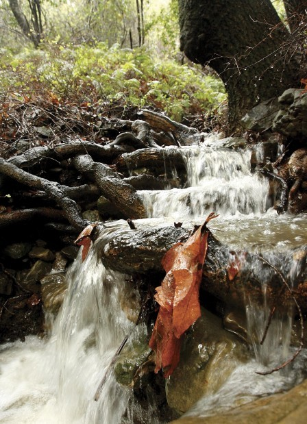 Local creeks reappear after recent rainstorms