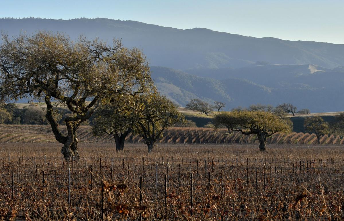 Camp 4 vineyard vista
