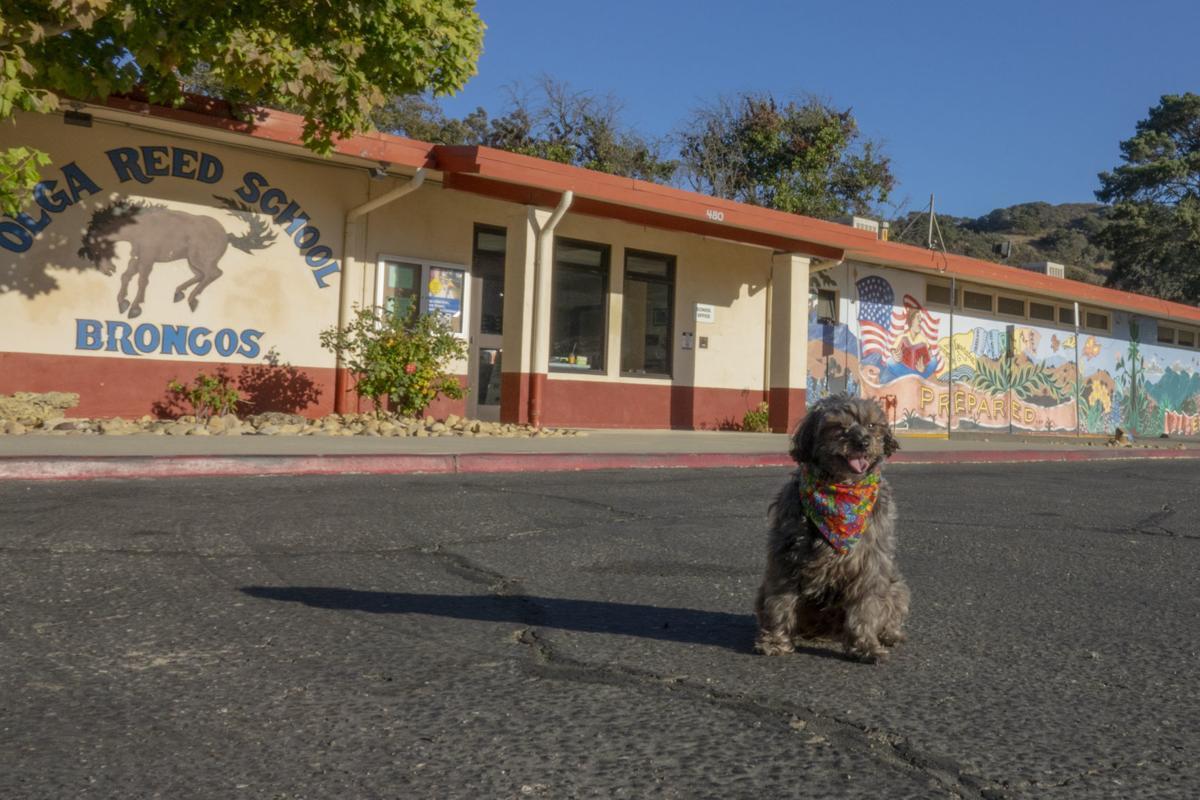 Sparkie in front of Olga Reed School in Los Alamos