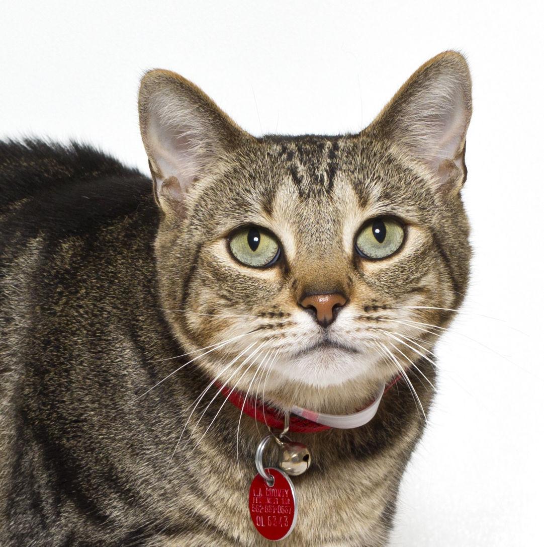 SMVHS Pet of the Week -- Meesh