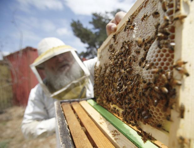 Preventing bee swarms