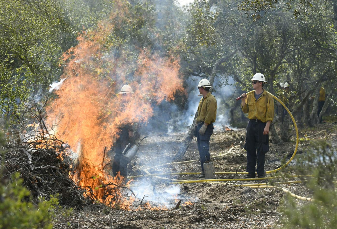 022619 Burton Mesa burn piles 03.jpg