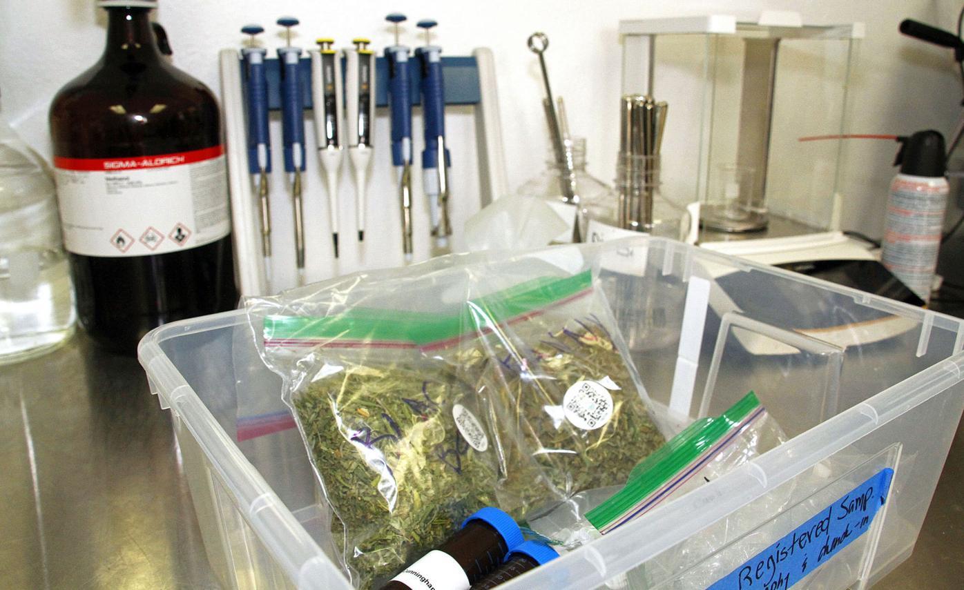 2017-1226-LT-marijuanatesting-10