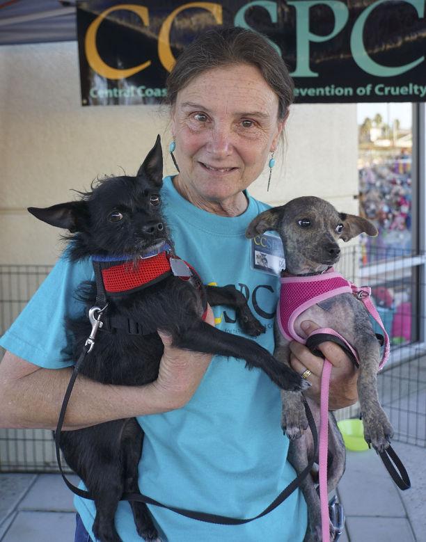 Central Coast SPCA -- Doc and Rita