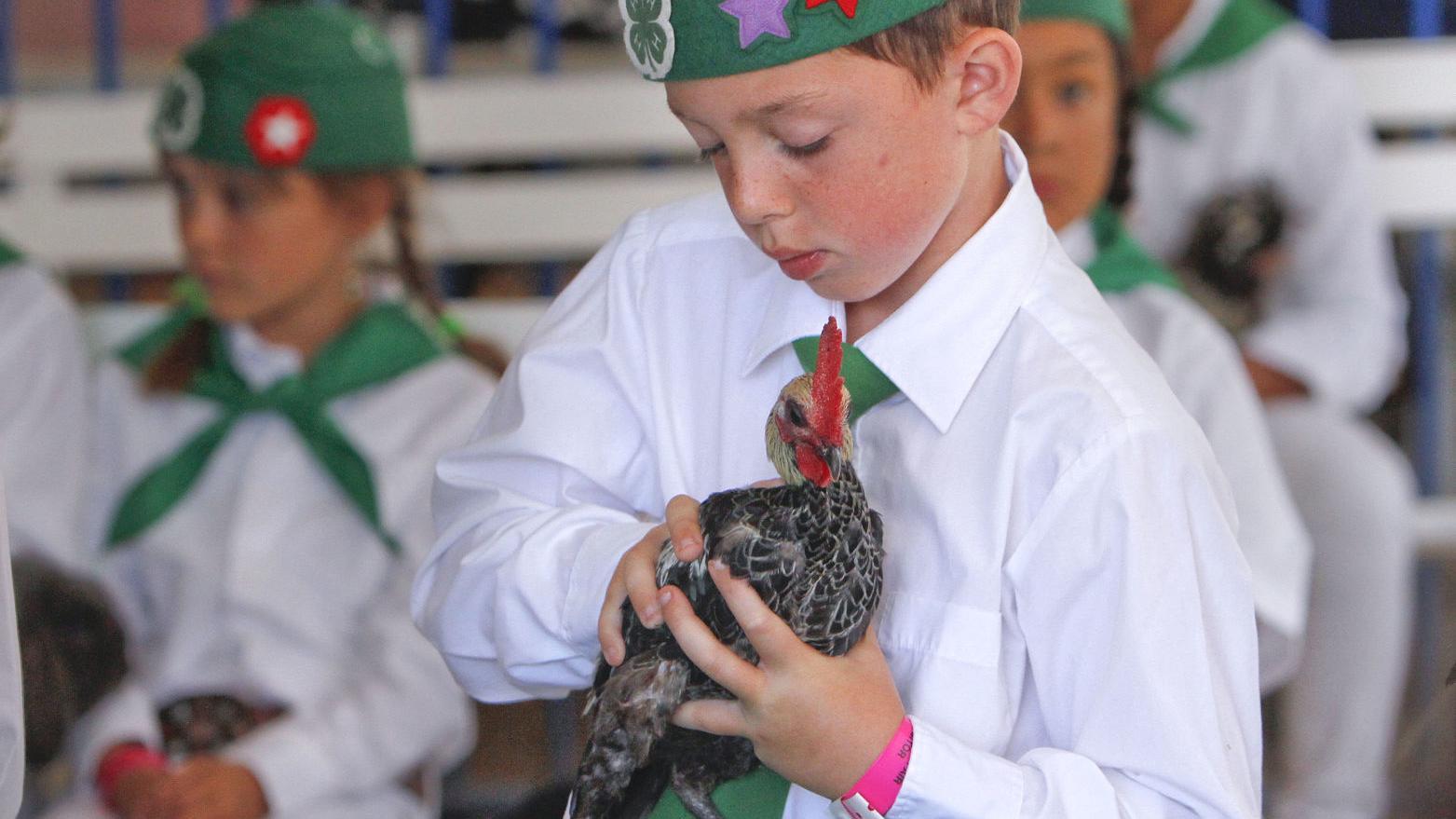 Santa Maria Fairpark board cancels poultry show at 2019 Santa Barbara County Fair