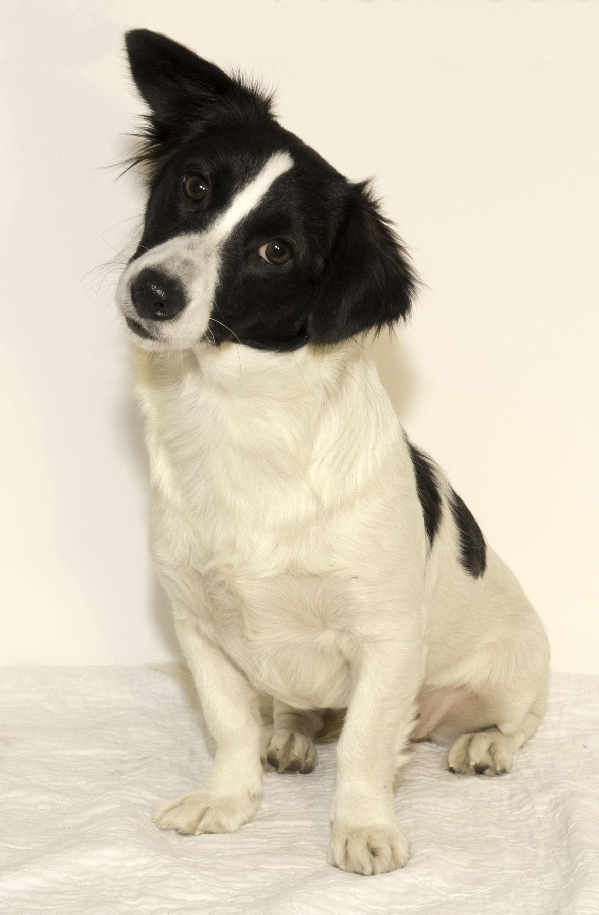 SMAC Pet of the Week -- Ruby