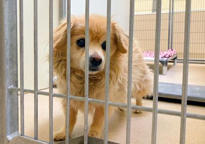 Doggy in the shelter
