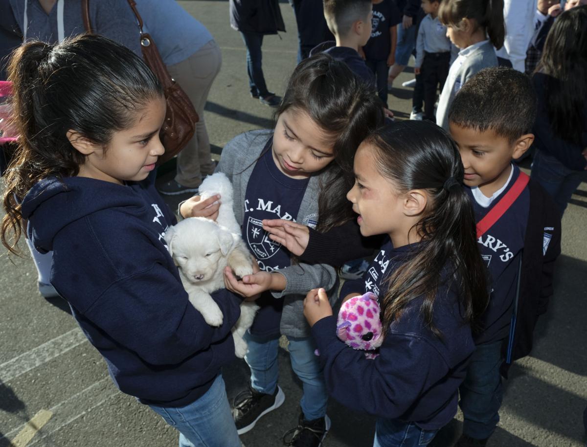 100417 St. Marys Animal Blessing 03.jpg
