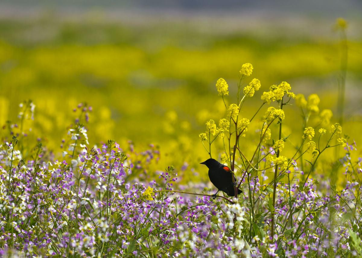 040518 Wildflowers 01.jpg