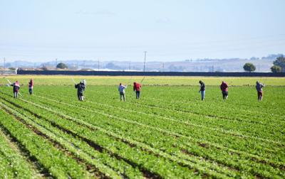 020221-smt-news-farm-workers-003