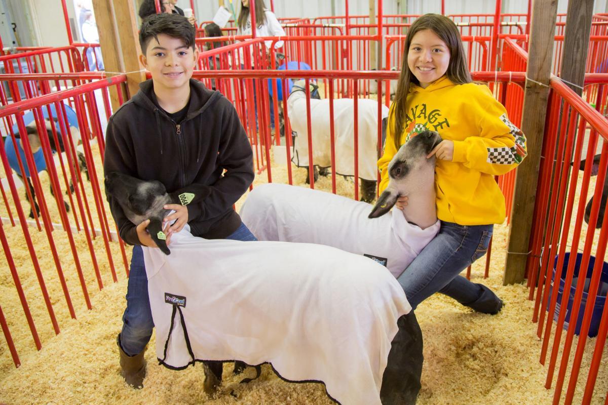 070919 SB Fair Animal Judging 02.jpg