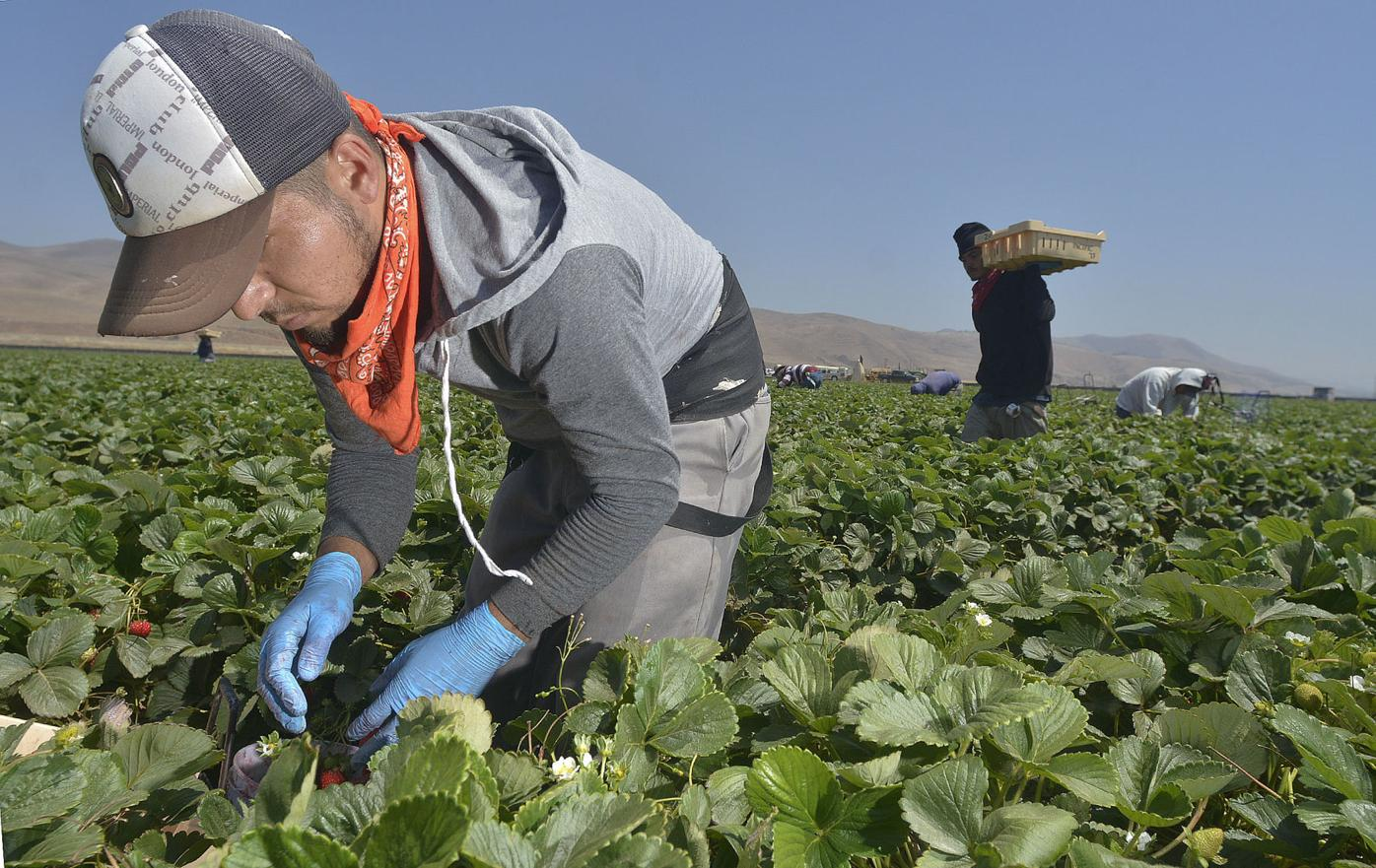 080516 H2A farmworkers 01.jpg