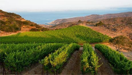 santa-catalina-vineyard-photo