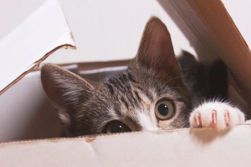 This Video Explains Why Your Cat Is So Weird