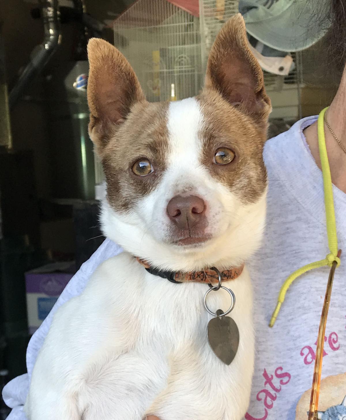 CCSPCA Pet of the Week -- Jamie