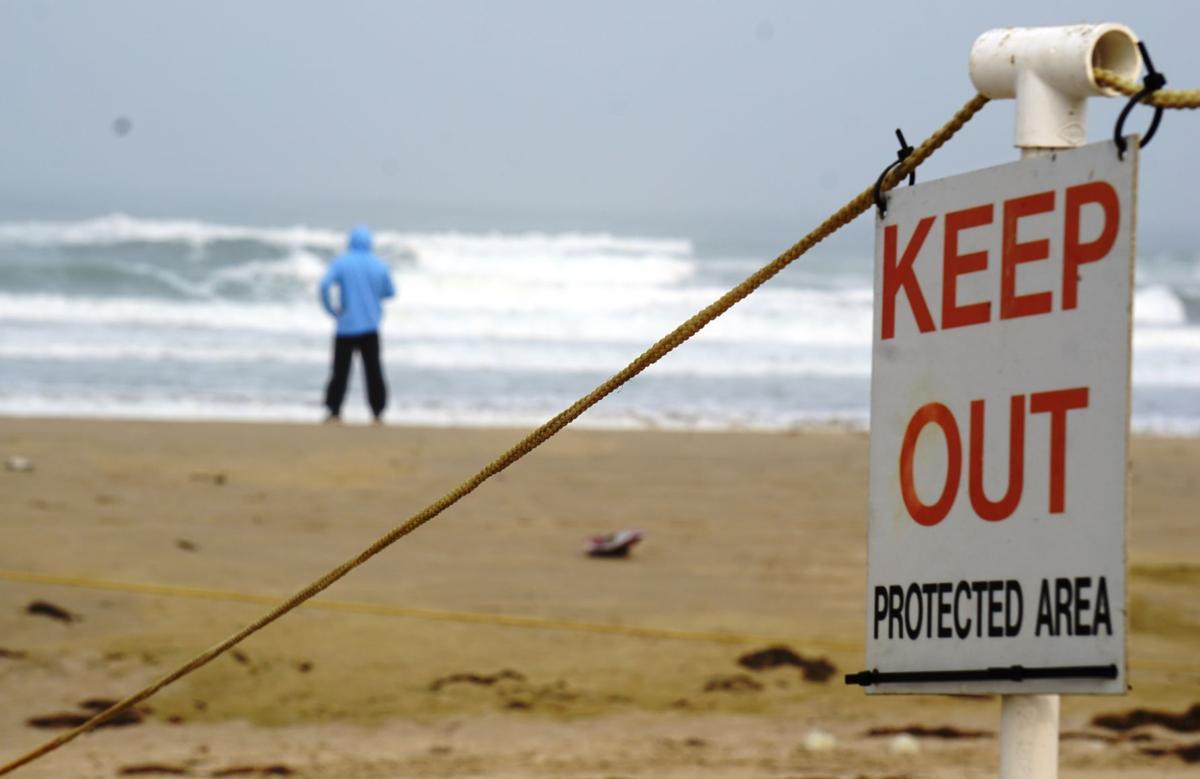 082120 Surf Beach plovers 02