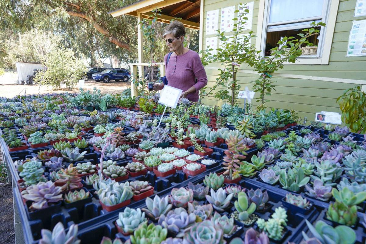 081019 Annual Summer Succulent Sale 01