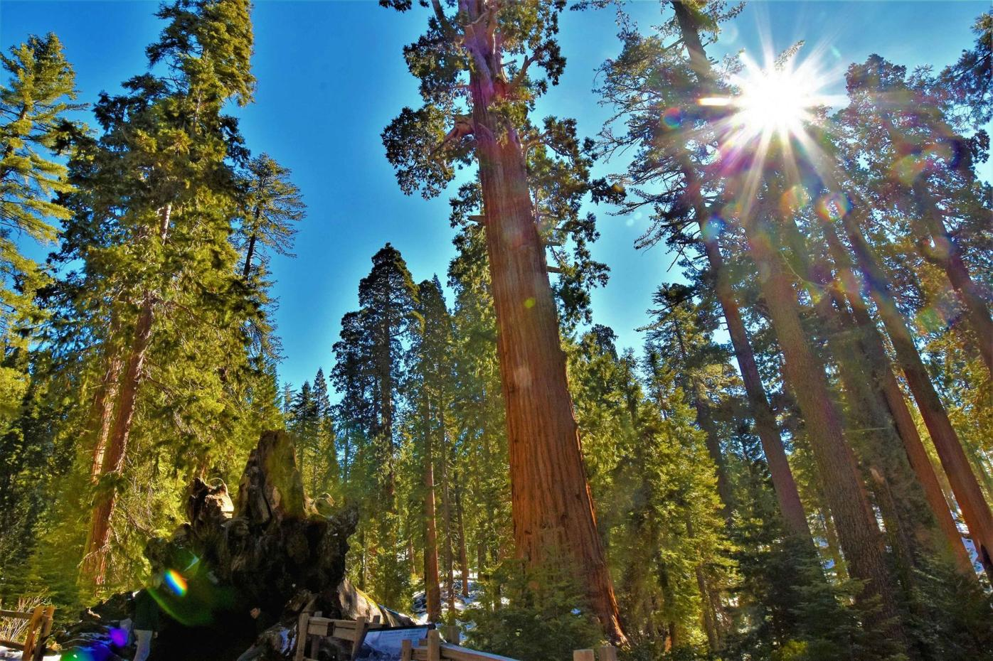 Sequoia National Park 1.jpg