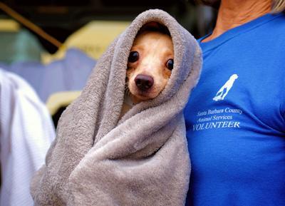 102320 shelter dogs 001 (Spanish)