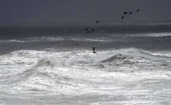 Seabirds over heavy seas