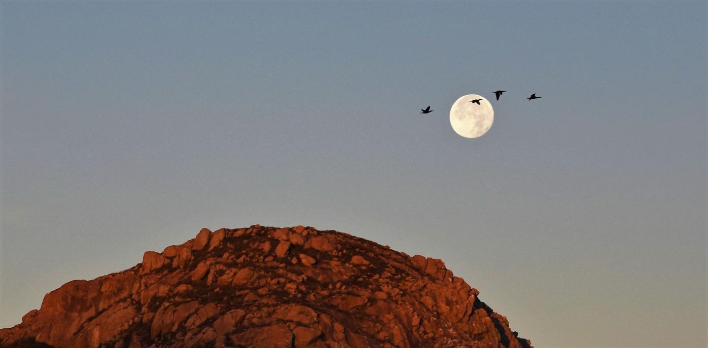 Moon Set .jpg