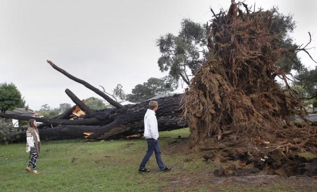 Waller tree falls