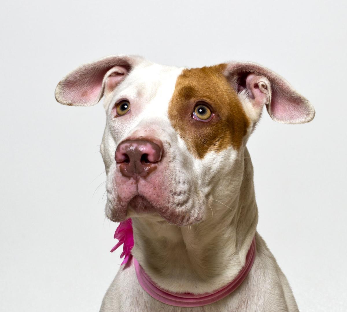 SMVHS Pet of the Week -- Bella