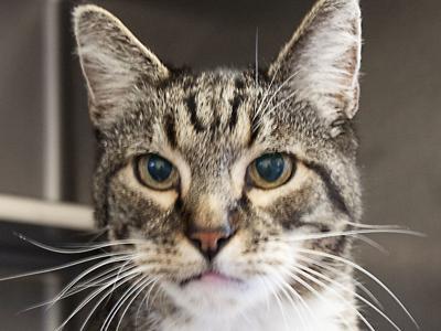 010920 CAPA Pet of the Week