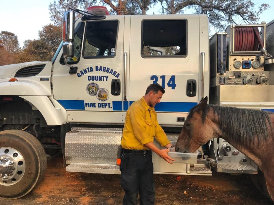 Strike Team 3 helps horses at Moc Fire, Tuolumne County
