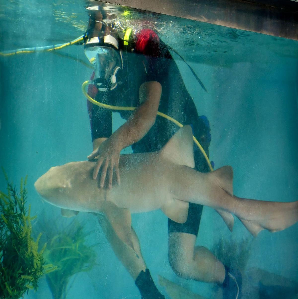 071018 Shark Experience 01.jpg