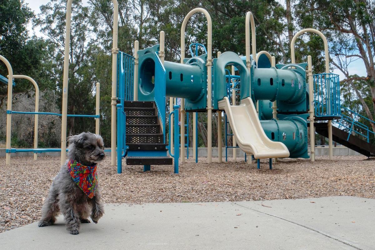 Sparkie Playground