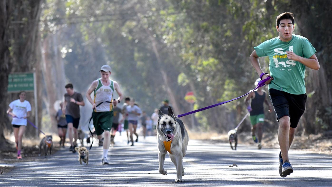 082916 St. Joseph dog runners 01.jpg