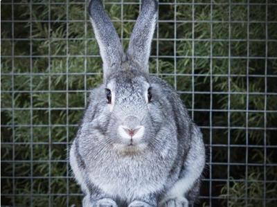 091620 CAPA Pet of the Week