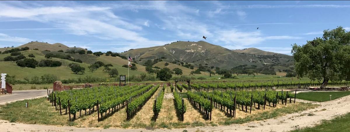 Zaca Mesa Winery vineyard