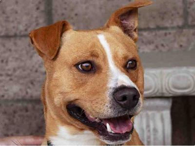 052820 CAPA Pet of the Week