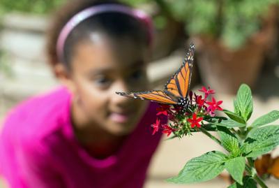 butterflies (Spanish)