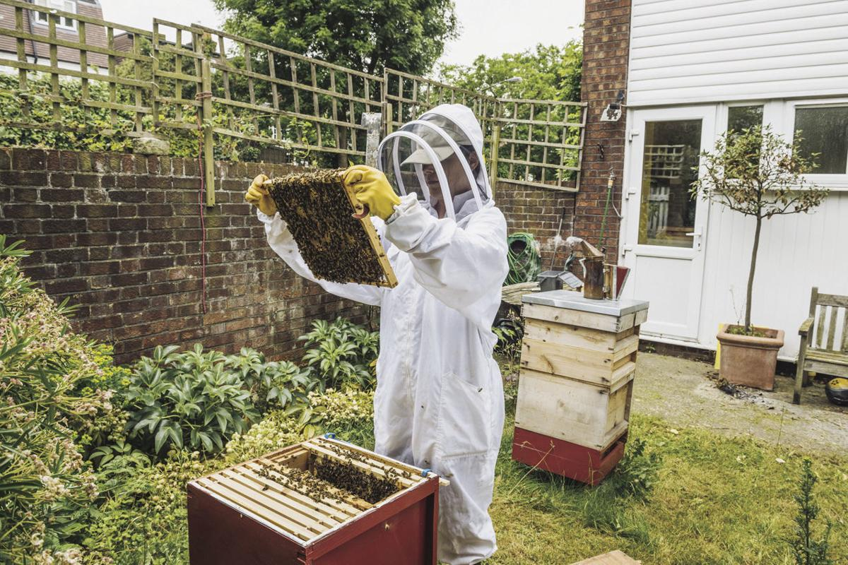 Saving bees one hive at a time: The basics of backyard beehives
