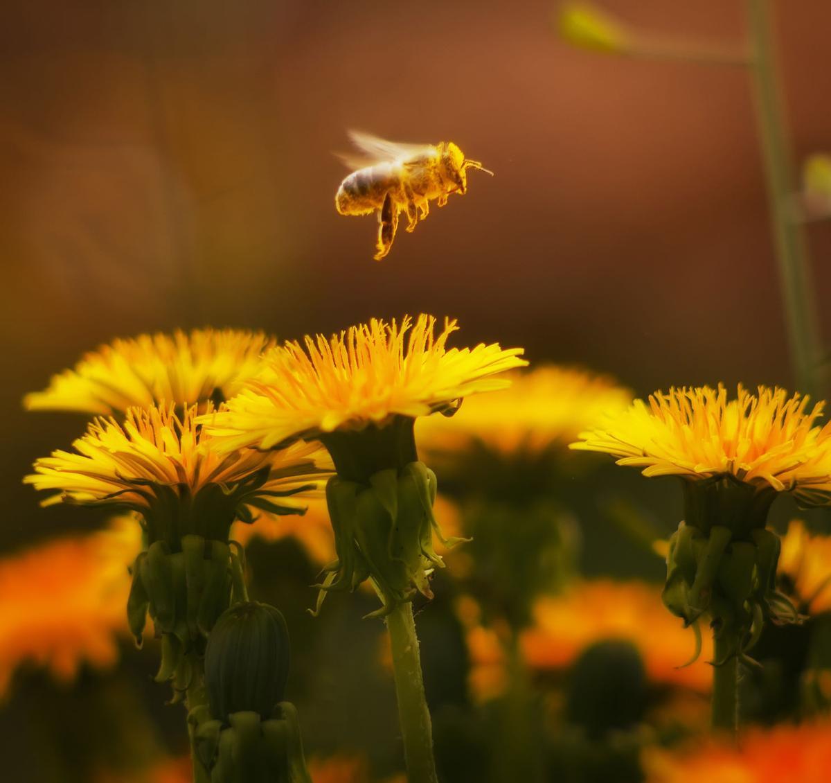 LIFE HEALTH-BEE-STING MYO