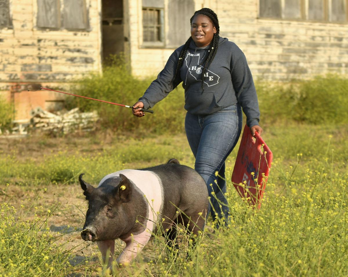 080918 Pig problem 01.jpg